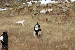Shepherds with new born lambs, Gran Sasso, Italy. The fields in the Italian Gran Sasso National Park are grazed in spring, summer and autumn by large flocks of Stock Photography