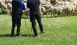 Shepherds and sheep Stock Images