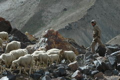 Sheppard avec la bande de chèvres et de moutons Image stock