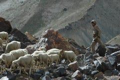 Sheppard con la moltitudine di capre e di pecore Immagine Stock