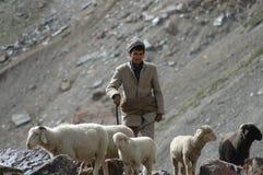 Sheppard met troep van geiten en schapen Stock Foto's