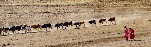 Shepperd masai immagini stock