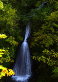 Shepperd's Dell Falls. Shepherd's Dell Falls is one of many beautiful falls at Columbia Gorge Stock Images