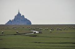 Sheps voor Saint Michel Royalty-vrije Stock Fotografie