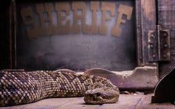 Sheriff de la serpiente de cascabel Imagen de archivo