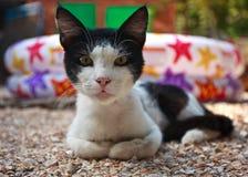Sherlock Holmes cat double Stock Photography
