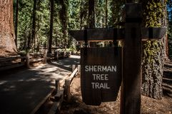 Sherman tree trail Stock Images