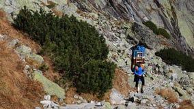 Sherpa στο εθνικό πάρκο Vysoke Tatry, Σλοβακία στοκ φωτογραφίες με δικαίωμα ελεύθερης χρήσης