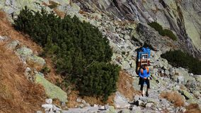 Sherpa in Nationalpark Vysoke Tatry, Slowakei lizenzfreie stockfotos