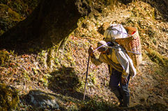 Sherpa. A picture of a local Sherpa carrying a big packet in a basket up the hill Stock Photography