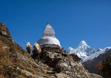 Sherpa som bär en vikt i Nepal royaltyfri fotografi