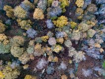 Sherwood Forest from above, Nottinghamshire, UK. The trees of Sherwood Forest taken from above in Nottinghamshire, UK stock photography