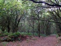 Sherwood Forest Landscape Fotografia Stock Libera da Diritti