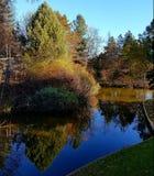 Sherwood Forest sjöreflexion Royaltyfria Bilder