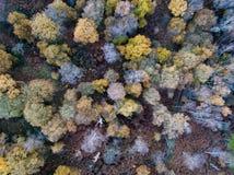 Sherwood Forest von oben, Nottinghamshire, Großbritannien Stockfotografie