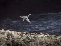 Shete Boka Heron Stock Photography
