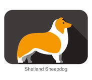 Shetland Sheepdog dog breed flat icon design Royalty Free Stock Image