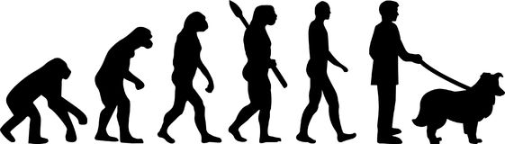 Shetland Sheepdog ewolucja ilustracja wektor