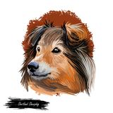 Shetland sheepdog purebred domesticated animal digital art. Canine watercolor portrait closeup, mammal with long fur. Long-haired pet looking in distance. Hand royalty free illustration