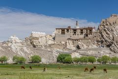 Shey Palace complex in Ladakh, India. Royalty Free Stock Photo