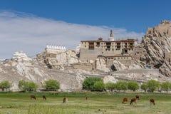Shey slottkomplex i Ladakh, Indien Royaltyfri Foto