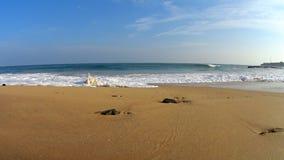 Shi Lanka ocean waves. And beach stock video