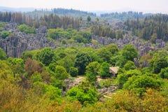 Shi Lin kamienia lasu park narodowy. Fotografia Royalty Free