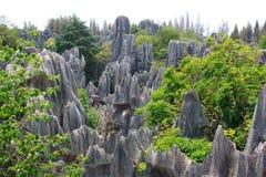 Shi Lin kamienia lasu park narodowy. Zdjęcia Stock