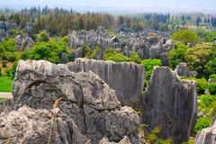 Shi Lin kamienia lasu park narodowy. Zdjęcia Royalty Free