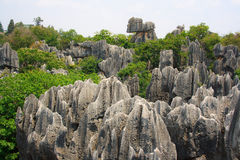 Shi Lin Stone forest national park. Royalty Free Stock Images