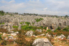Shi Lin Stone forest national park in Yunnan province, China Royalty Free Stock Photo