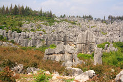 Shi Lin Stone forest national park in Yunnan province, China Royalty Free Stock Image