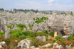 Shi Lin Stone forest national park in Yunnan province, China Stock Image