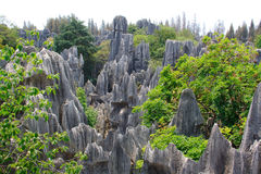 Shi Lin Stone skognationalpark. Arkivfoton