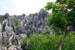 Shi Lin Stone skognationalpark. Royaltyfri Fotografi