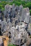 Shi Lin Stone skognationalpark. Royaltyfri Bild
