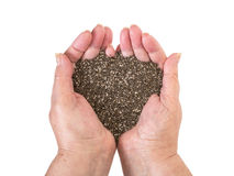 Shia seeds in woman hands Stock Photo