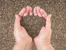 Shia seeds in woman hands Stock Images