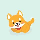 Shiba Inu dog. Royalty Free Stock Photos