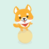 Shiba Inu dog. Stock Photography
