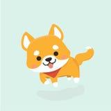 Shiba Inu dog. Stock Photos