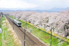 Shibata, Miyagi, Tohoku, Япония на 12,2017 -го апреля: Линия поезд и вишневые деревья Tohoku МЛАДШЕГО вдоль речных берегов Shiroi стоковые фотографии rf
