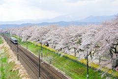 Shibata, Miyagi, Tohoku, Japão em abril 12,2017: Linha trem de Tohoku do JÚNIOR e árvores de cereja ao longo dos bancos de rio de Imagens de Stock