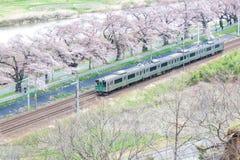 Shibata Miyagi, Tohoku, Japan på April 12,2017: JRTohoku linje drev och körsbärsröda träd längs Shiroishi flodbanker i vår arkivbild