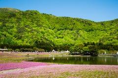 Shibazakura领域 免版税库存照片