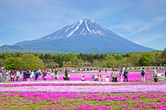 Shibazakura Festival in Japan with Mount Fuji Royalty Free Stock Photos