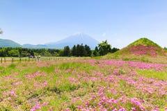 Shibazakura festival med fältet av rosa mossa av Sakura eller ch royaltyfri bild