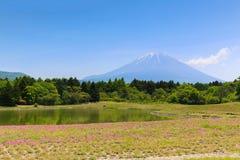 Shibazakura festiwal z polem różowy mech Sakura lub ch Zdjęcia Stock