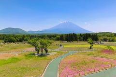 Shibazakura festiwal z polem różowy mech Sakura lub ch Fotografia Royalty Free