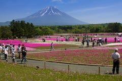 Shibazakura festiwalu tło, Maj 2015 Zdjęcie Royalty Free